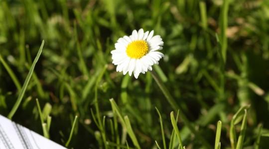 Bauplan mit Blume VII