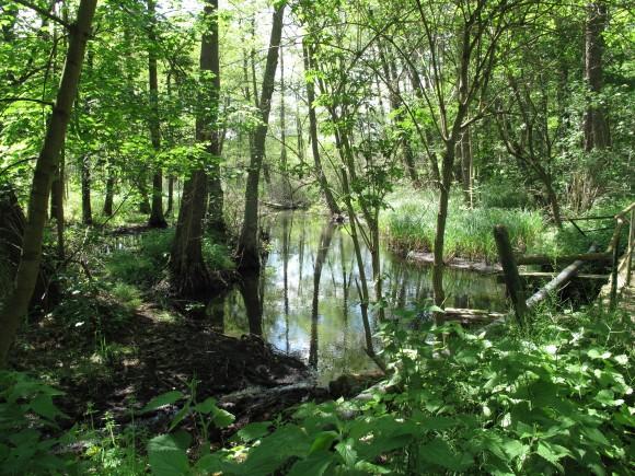 Naturschutzgebiet Löcknitztal