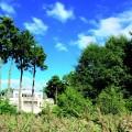 Grundstücke in Bad Saarow - Spreeinsel Immobilien